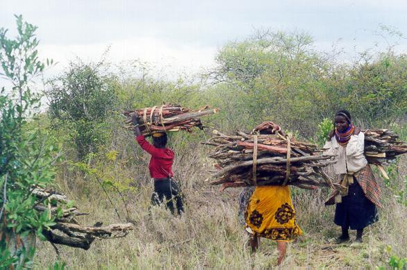 Women gathering firewood, Zombe, Kenya