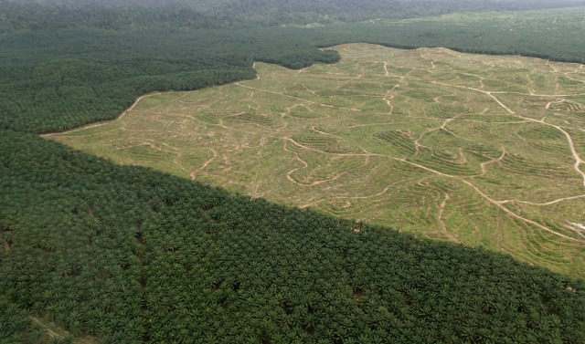 Palm oil deforestation in Sabah, Malaysian Borneo